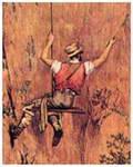 La Recolección de la Orchilla en Gran Canaria. Accidentes mortales en La Aldea de San Nicolás (1834-1876)