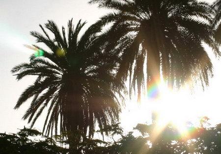 sol tras las palmeras