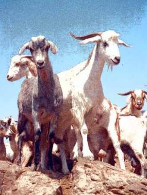 Epifanía del Señor: un rancho de pastores